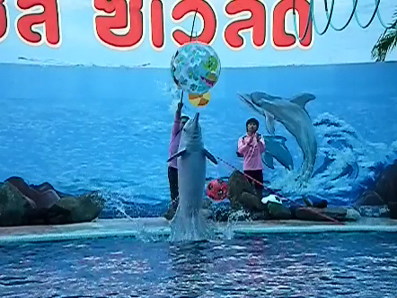 Slow Motion Dolphin Show in Oasis Sea World