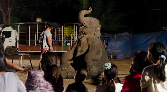 Elephant Show in Paknam Keamnu Chanthaburi