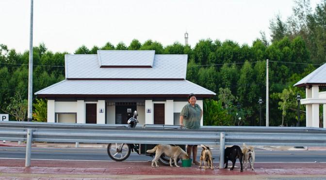 Dog Lover in Paknam Khaem Nu